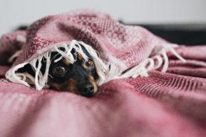 寂しそうにこっちを見つめる犬